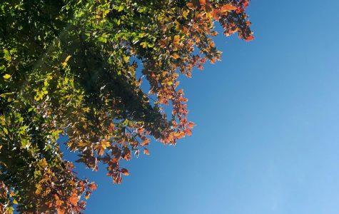 Fall around North